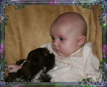 future tiny chinese imperial shih tzu breeder, and my grand daughter Elizabeth. We have several Imperial puppies for sale through out the year with AKC champion linage